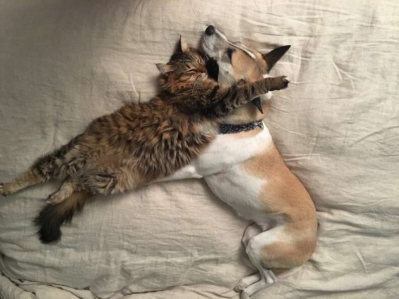 Dog and cat snuggling together on bed