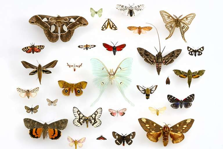 the natural history of moths mark young