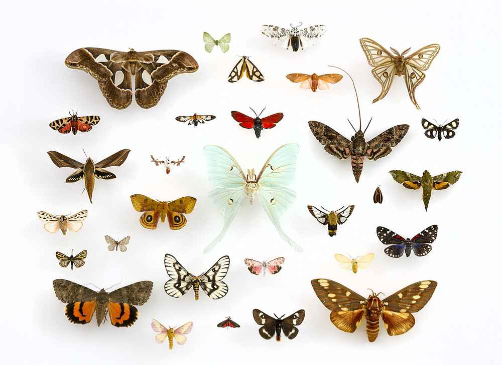 Earliest Butterfly and Moth Fossils Prove They Are Exceptional ...