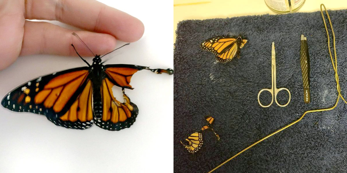 Woman Helps Butterfly With Broken Wing Fly For First Time