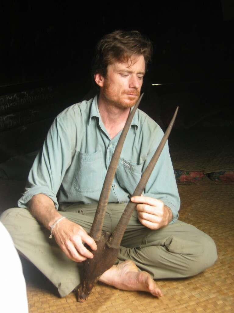 Rare 'Asian unicorn' or saola horns