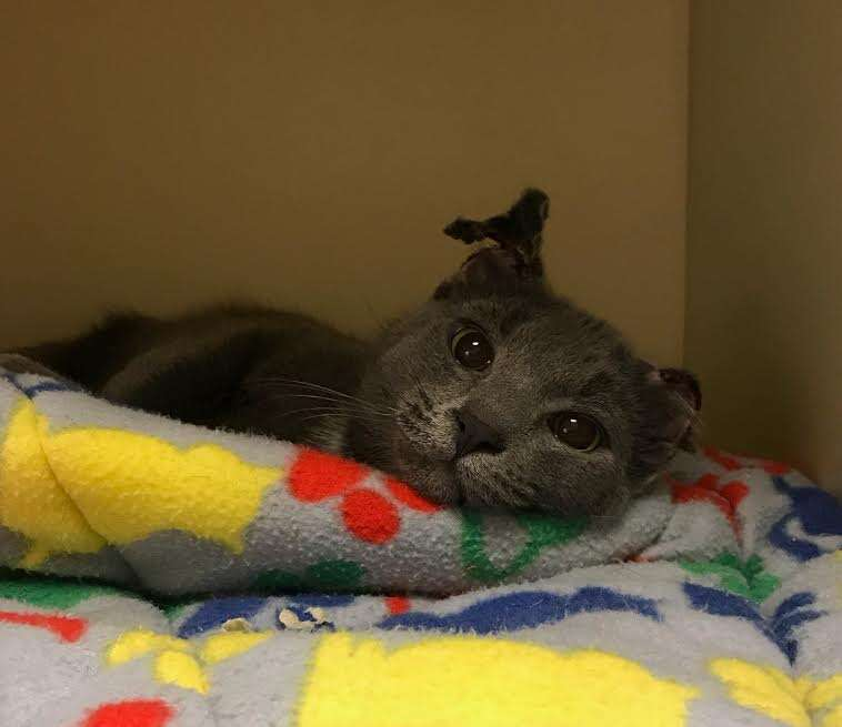 Hardy kitten rescued from abuse