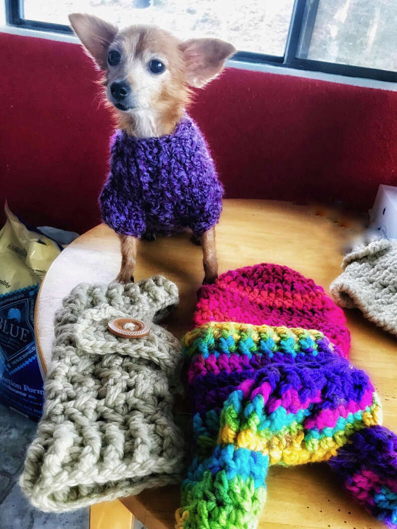 Blanche senior dog gets sweaters