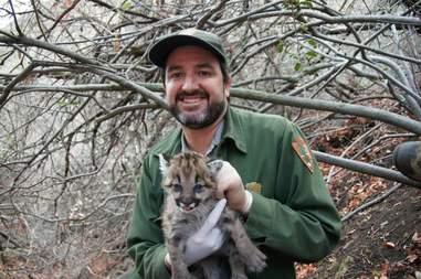 california rat poison mountain lion