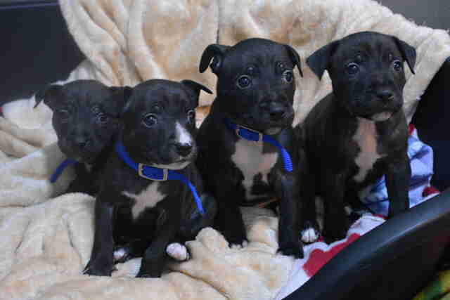 Puppies found in box in London park