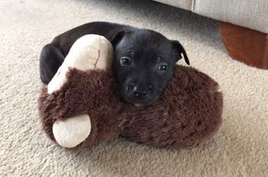 Abandoned puppy saved from Victoria Park, London