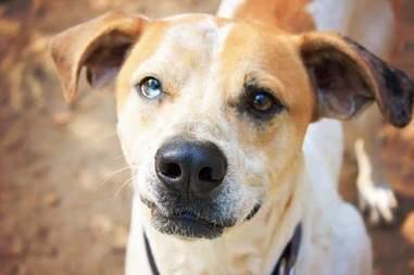 dog rescue tinder georgia