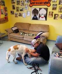 tinder dog rescue henry