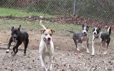 tinder dog adoption henry georgia