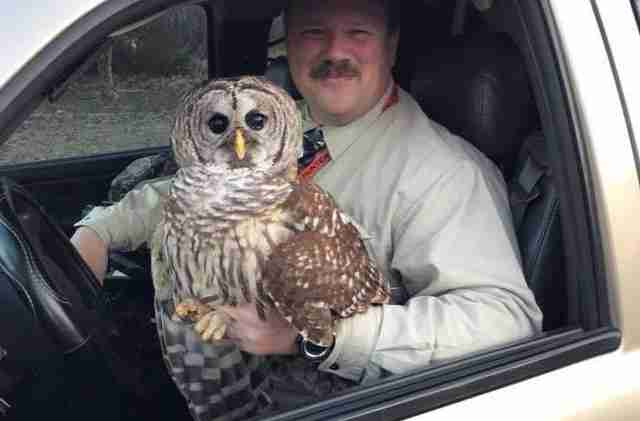 injured owl rescued by police