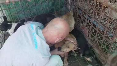 michael chour rescuing dogs cambodia slaughterhouse