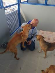 Chour interacting with two of the rescued dogs at the shelter in Thailand