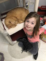 senior cat needs a home