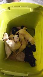 puppies in trash bin texas rescue