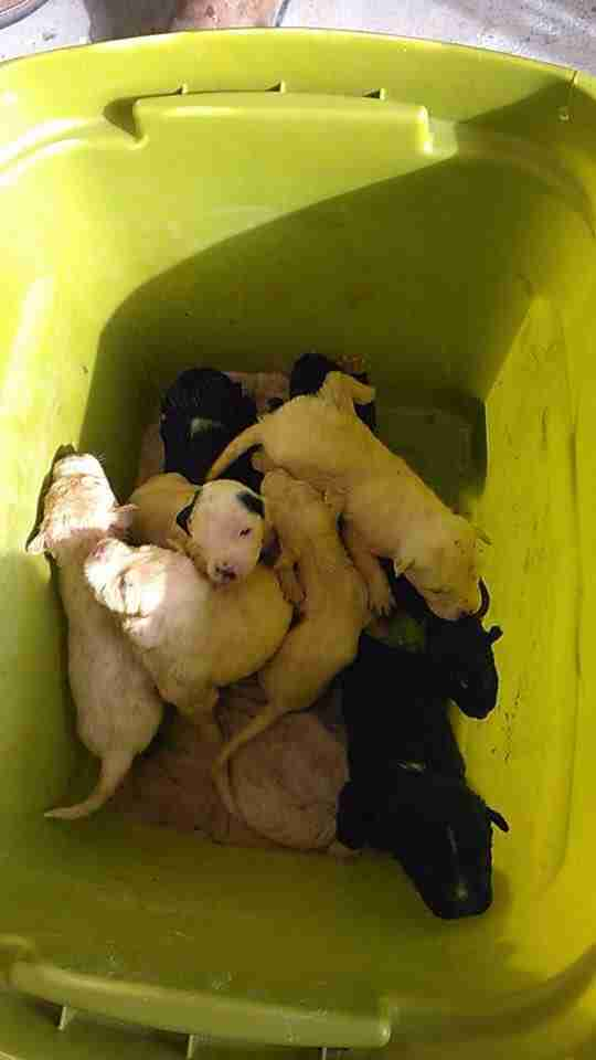 puppies in trash bin texas rescue