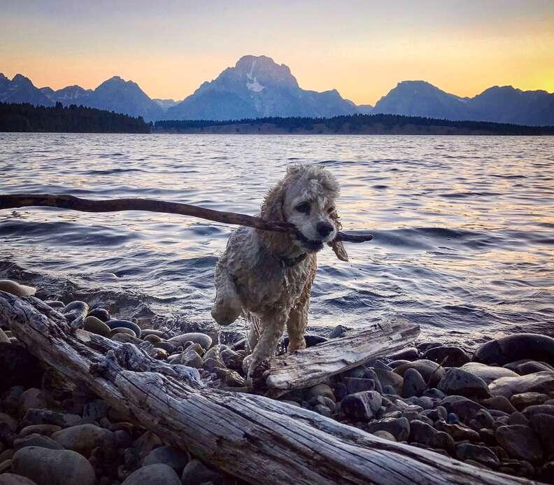Pet dog with stick at beach