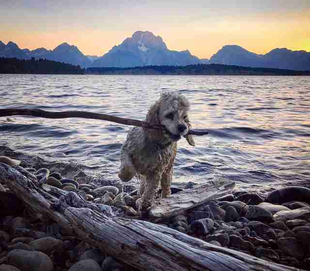 Pet dog with stick at beach