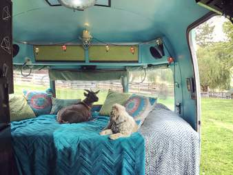 Pet goat and dog in vintage Airstream