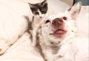 rescue dog fosters kittens