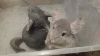 ari and john take a dust baths