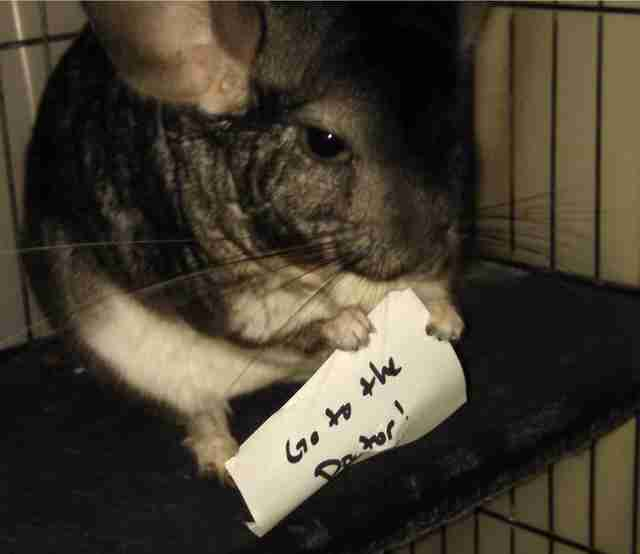 Ari the chinchilla tells his mom to go to the doctor