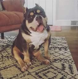 macho furious dog rescued