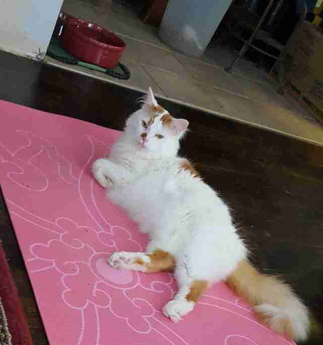 cat gets his very own work out mat