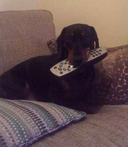 dog steals random household objects england