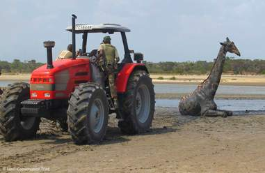Tractor and rescuers after helping giraffe in mud