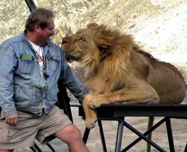 Trainer with captive lion
