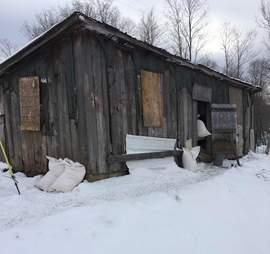 pigs kept in dark barn new york rescue