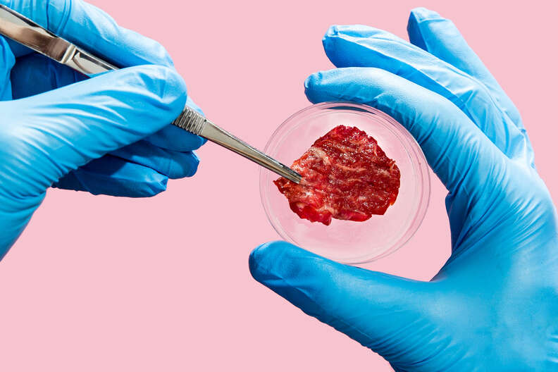 lab grown meat petri dish and latex gloves