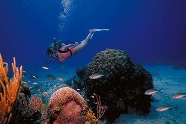 a scuba diver in the us virgin islands
