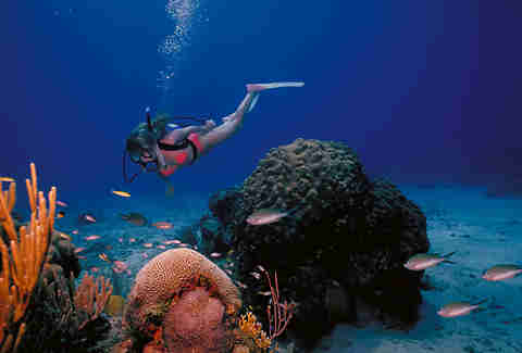 a scuba diver in the us virgin islands