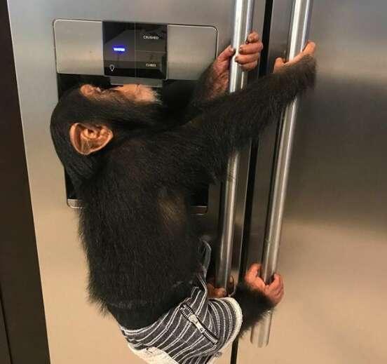 baby chimp florida zoo pet