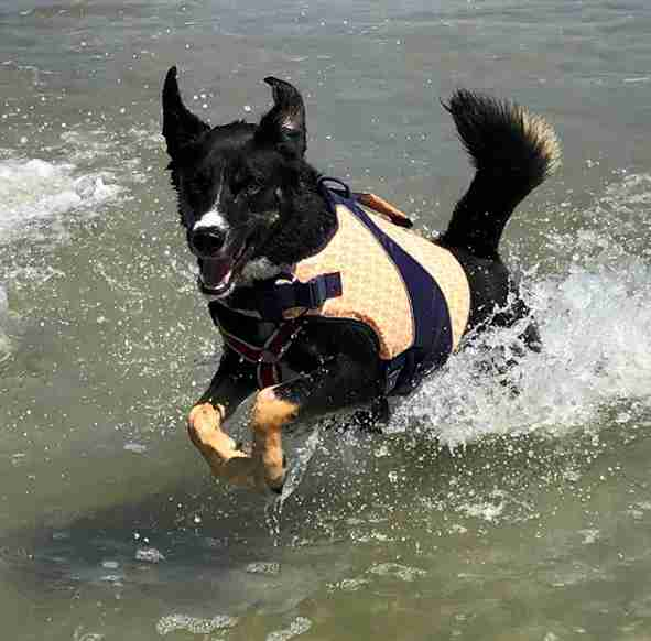 dog beach rescue california