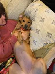 Dog lying back on woman on couch