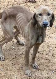 Emaciated dog on road
