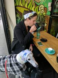 Salty the greyhound at a Melbourne cafe