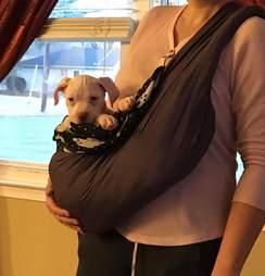 rhett puppy carried in a sling
