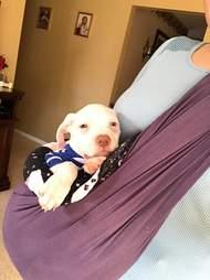rhett puppy carried in sling