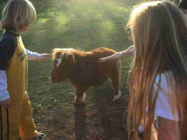 Children petting miniature horse
