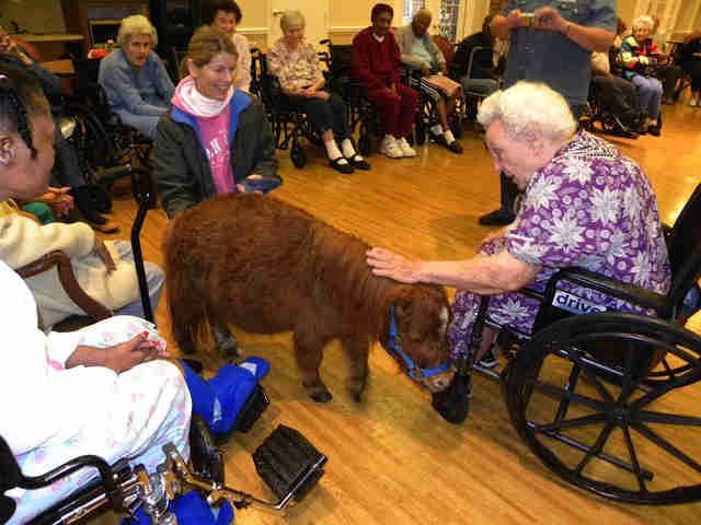 Woman in wheelchair petting miniature horse