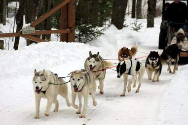 Arctic Paws Dog Sled Tours