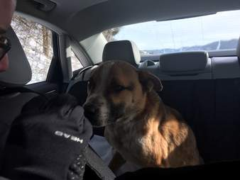 Stray dog on way to shelter in Kentucky