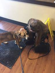 Rescuer says goodbye to stray dog she saved from trash pile