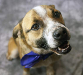 Dog rescued from trash pile in Kentucky