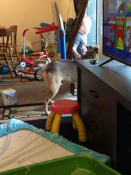 Dog at forever home with little boy