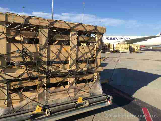 Sheep packed into cargo crates at Australian airport