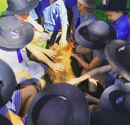 Rusty the dog getting pets and meeting fans